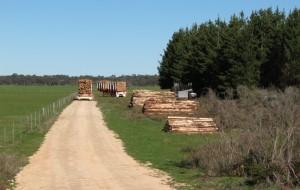 Harvesting_a_farm_plantation_of_1996_pinus_radiata